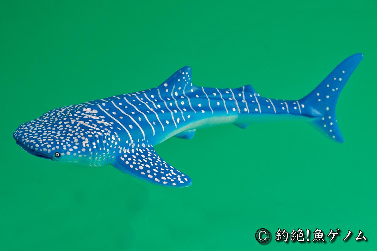 ジンベエザメの画像 p1_16