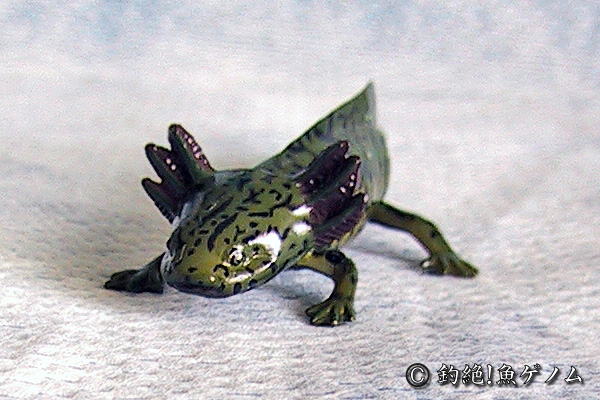 メキシコサラマンダーの画像 p1_19